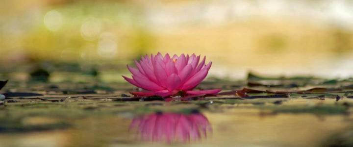 Despre fericire, relații și împlinire cu Bodhi Sarango…
